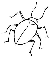 Käfer - Käfer, Insekt, krabbeln, Anlaut K