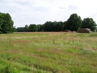 Wiese - HSU, Erdkunde, Landschaft, Wiese, Blumenwiese, Sommerwiese, Gräser