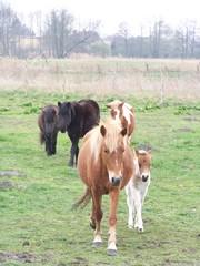 Pferde #2 - Pferde, Pferd, Pony, Weide