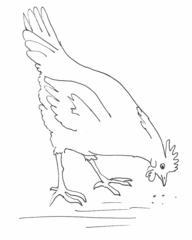 Huhn - Zeichnung - Huhn, Henne, Glucke, Haushuhn, Haustier, Vogel, gackern, Hühnchen, blöd, dumm, rupfen, Hühnerauge, Hühnerhof, picken, Körner, Anlaut H