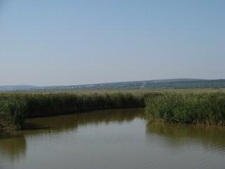 Schilfgürtel am Neusiedlersee - Schilf, Schilfgürtel, Schilfrohr, Neusiedlersee, Steppensee, See, Burgenland, Reet, Naturschutz, Nationalpark