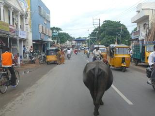 Straßenszene in Indien - Straßenszene, Verkehr, Tuk-Tuk, schwarz-gelbes Taxi, Taxi, Kuh, Indien