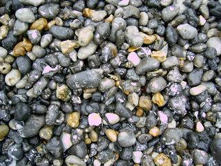 Kiesel, nass - Stein, Strand, Normandie, Grautöne, grau, Feuerstein, Silex, Kiesel, Geologie, Struktur