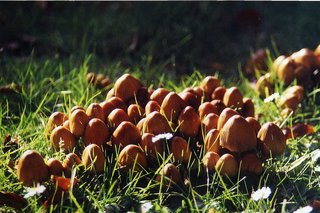 Pilze - Pilz, Pilze, Wiese