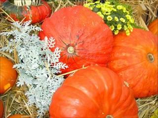 Kürbis 3 - Kürbis, Herbst, Halloween, Gemüse