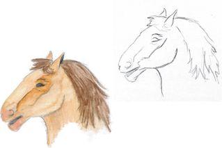 Pferd 1 - reiten, Fortbewegung, Haustier, Hoftier, Nutztier, Kopf, Pferdekopf, Mähne, braun