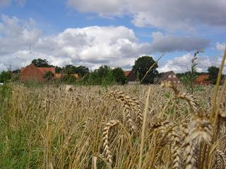 Kornfeld mit Dorf - Landschaft, Norddeutsches Tiefland, Dorf, Feld, Sommer, Korn, Wolken, Weizen, Getreide, reif, trocken
