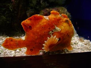 Zierfisch - Fisch, Zierfisch, Aquarium