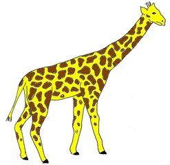 Giraffe bunt - Giraffe, Zootier, Afrika, Anlaut G