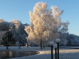 Bäume im Raureif - Winter, Raureif, Kristalle, kalt, Reif, Niederschlag, fest, Luftfeuchtigkeit, Wetter, bizarr, Resublimation, Eis, Wetter, Bäume, Pflanze, Himmel, blau, Sonne, Teich, zugefroren