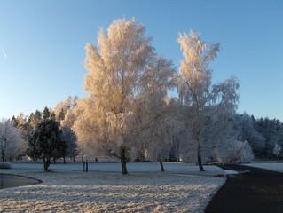 Bäume im Raureif - Winter, Raureif, Kristalle, kalt, Reif, Niederschlag, fest, Luftfeuchtigkeit, Wetter, bizarr, Resublimation, Eis, Wetter, Bäume, Himmel, blau, Sonne