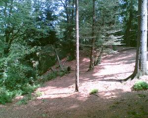 Im Wald - Wald, Mischwald, Waldboden, Heimat, Baum, Bäume, Baumstamm, Äste, Blätter