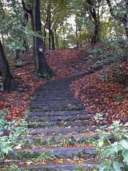 Treppe im Wald - Ruine, Wald, Spaziergang, Heimat, Märchen, Treppe, Steintreppe, Stufen, Meditation, Weg, Herbst