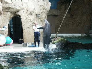 Delfin und Delfintrainer - Tierdressur, Delfin, Delfinarium, Zoo, Tiertrainer, Säugetier