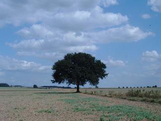 Baum in freier Landschaft - Baum, Weite, Meditation, Wolken, Schreibanlass