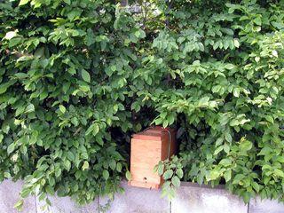 Zellteilung des Bienenschwarms #4 - Bienen, Schwarm, Natur, Imkerei, Bienenschwarm, Bienenvolk, Kasten, einfangen