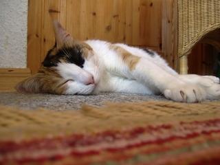 schlafende Katze - Katze, Tier, ausruhen, entspannt, Fell