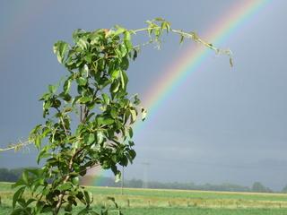 Regenbogen - Religion, Meditation, Regenbogen