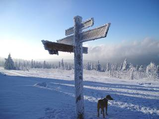 Winter im Harz - Winter, Schnee, Vereisung, Harz, Landschaft, Jahreszeiten, Wegweiser, Kreuzung, Reif, Raureif
