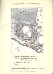 Schwammparenchym von Vicia faba - Vicia faba, Ackerbohne, Saubohne, große Bohne, Hülsenfrüchtler, Schmetterlingsblütler, Kulturpflanze, Blatt, Schwammgewebe, Zellorganellen, Mitochondrien, Vakuole, Fotosynthese, Plastiden, Stärkekorn, Zellkern, Zellwand, Ribosomen, Interzellulare, Endoplasmatisches Reticulum