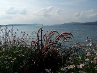 Sommer am Bodensee - Bodensee, Sommer, See, blau, Himmel, Wolken, Meditation, Ufer