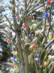 Osterbaum - Ostern, Osterbrauch, Symbol, Frühlingsfest, Baum, Eier, bunt, viele, Osterei, Ostereier