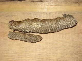 Wespennest - Wespe, Insekt, Waben