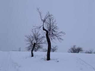 Bizarre Bäume - Winter, Baum, Bäume, bizarr, Form, knorrig, Äste, Schnee, weiß, grau, Kunst, kahl, Kontrast, Schreibanlass