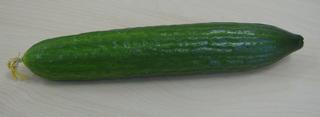 Gurke - Gurke, Salatgurke, Kürbisgewächs, Schlangengurke, Gemüse