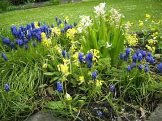 buntes Frühblüher-Beet - Frühling, Frühblüher, Hyazinthen, Schlüsselblume, gelb, weiß, blau, Zwiebelgewächse, Beet, Garten