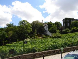 Weinberg in Paris - Weinberg, Paris, Montmartre, vignoble, Frankreich