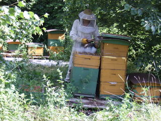 Imker - Imker, Natur, Bienen, Bienenstöcke, Bienenkästen, Honig