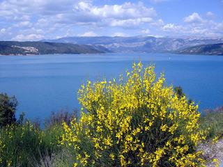 Lac du Verdon (Provence) - See, Ginster, gelb, Frankreich, Provence, blau, Landschaft, Strauch, Natur