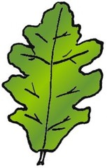 Eichenblatt 1 - Pflanzen, Blatt, Eiche, Pflanzenteil, Herbst, Baum, Anlaut B