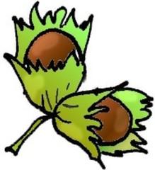 Haselnuss - Pflanze, Strauch, Hecke, Hasel, Nuss, Frucht, Haselnuss, zwei, Anlaut N, Hülle