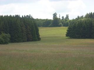 Waldsaum - Wiese, Westerwald, Fuchskaute, Wald, Fichte, Waldsaum
