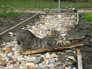 Kätzchen - Haustier, Jungtier, Tierkind, Katze, grau, getigert, Fell, Kätzchen, Krallen, schärfen, warten