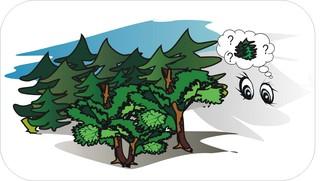 Sprichwörter - bildlich dargestellt - Sprichwort, Redewendung, Umgangssprache, bildlich, Wald, Bäume, sehen