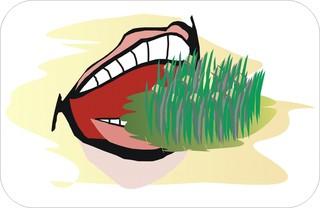 Sprichwörter - bildlich dargestellt - Sprichwort, Redewendung, Umgangssprache, bildlich, Gras, beißen