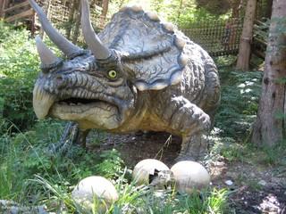 Triceratops - Dinosaurier, Echse, Evolution, Devon, Drache, Biologie, Triceratops, Dino, Fossil