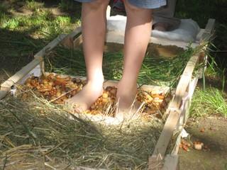 Sinnespfad - Füße, Sinne, Wald, fühlen, Boden, Beine, Zehen, barfuß, Erlebnis, Naturerlebnis