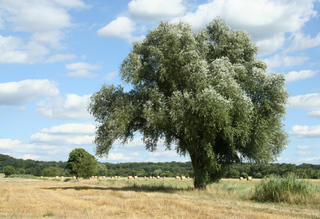 Erntezeit - Stroh, Ernte, Weide, Erntezeit, Stroh, getrocknet, Stängel, Strohballen, ausgedroschen, Schreibanlass