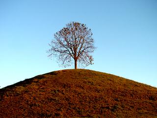 Herbst - Herbst, Jahreszeit, Baum, Verfärbung, färben, Landschaft, Meditation, Hügel