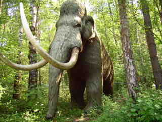 Mammut - Mammut, Altsteinzeit, Steinzeit, Urgesellschaft, Jagd