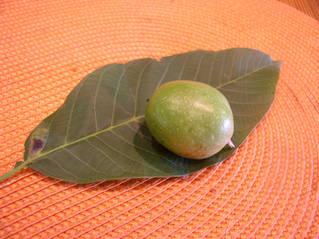 Unreife Walnuss - Walnuss, Nuss, Natur, heimische Pflanzen, Nahrungsmittel, Frucht, unreif, Umhüllung, Blatt, grün