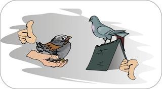 Sprichwörter - bildlich dargestellt - Sprichwort, Redewendung, Umgangssprache, bildlich, Spatz, Hand, Taube, Dach