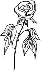 Rose - Rose, Blume, Blüte, Dornen, Illustration, Anlaut R