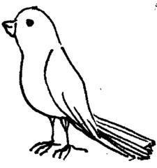 Vogel - Vogel, Illustration, Anlaut V
