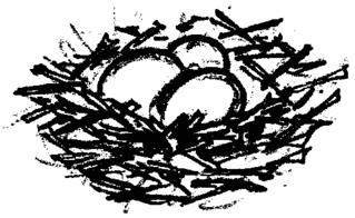 Nest - Nest, Eier, drei, Menge, Anlaut N, Vogelnest, Wörter mit ei