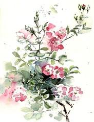 Rosenblüten - Rosenblüten, Rose, Blüten, Illustration, Aquarell